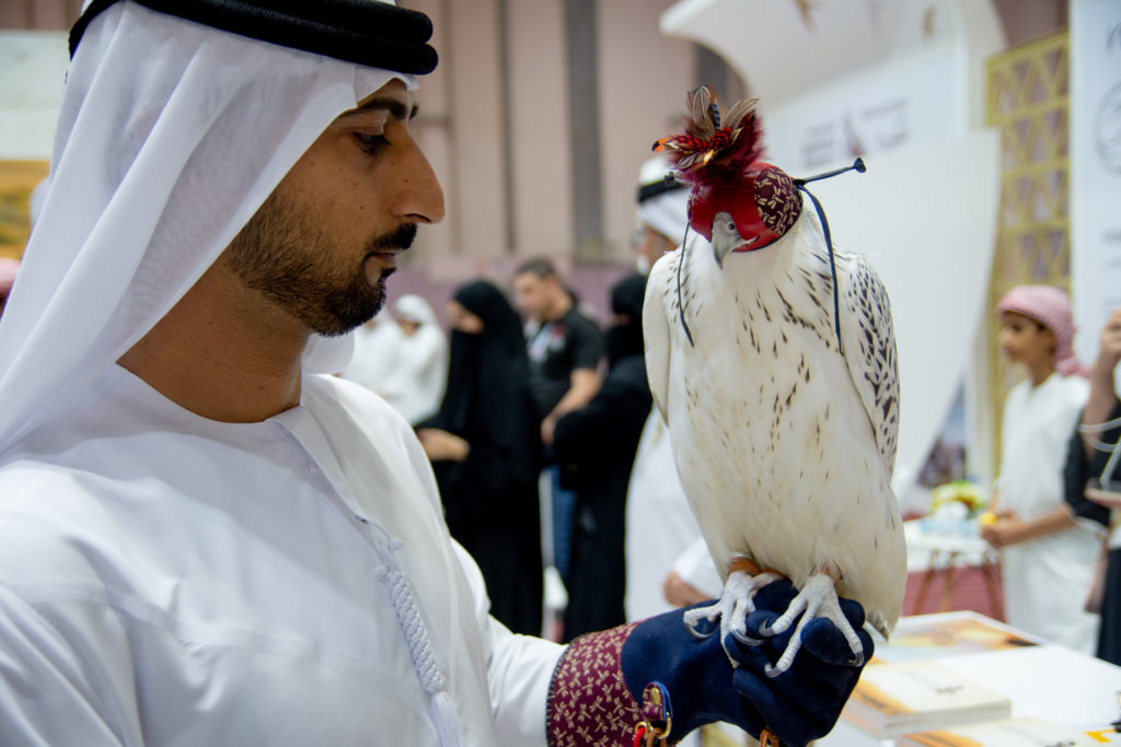 ADIHEX beauty gyrfalcon & falconry glove hood