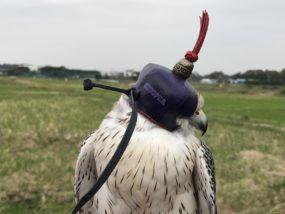 stooper dutch falcon hood