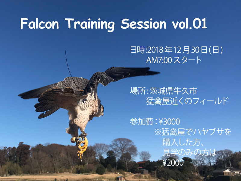 falconry training STOOPER 猛禽屋